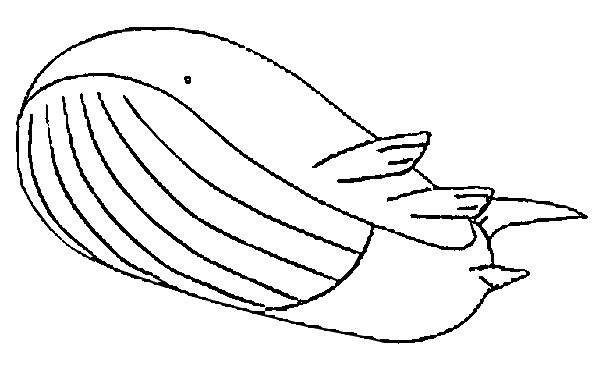 coloriage pokemon Wailord